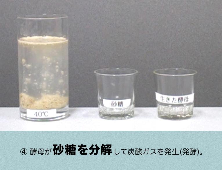 生酵母で実験しました
