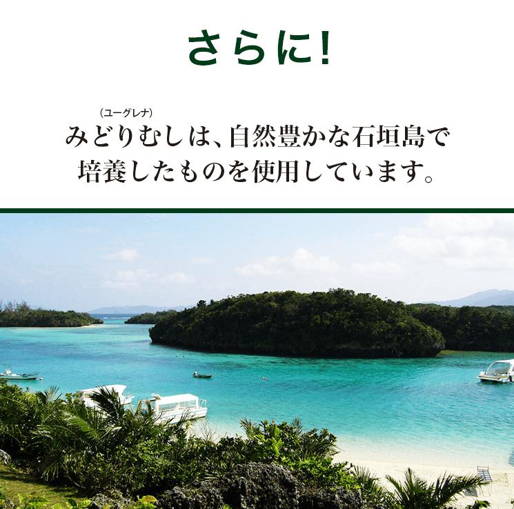 みどりむしは自然豊かな石垣島で栽培したものを使用しています
